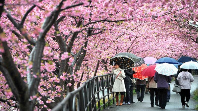 Những đều bạn cần chú ý khi đi du học Nhật