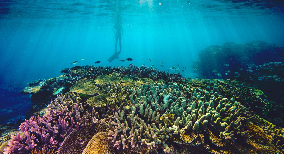 Quần thể san hô đẹp nhất tại Úc